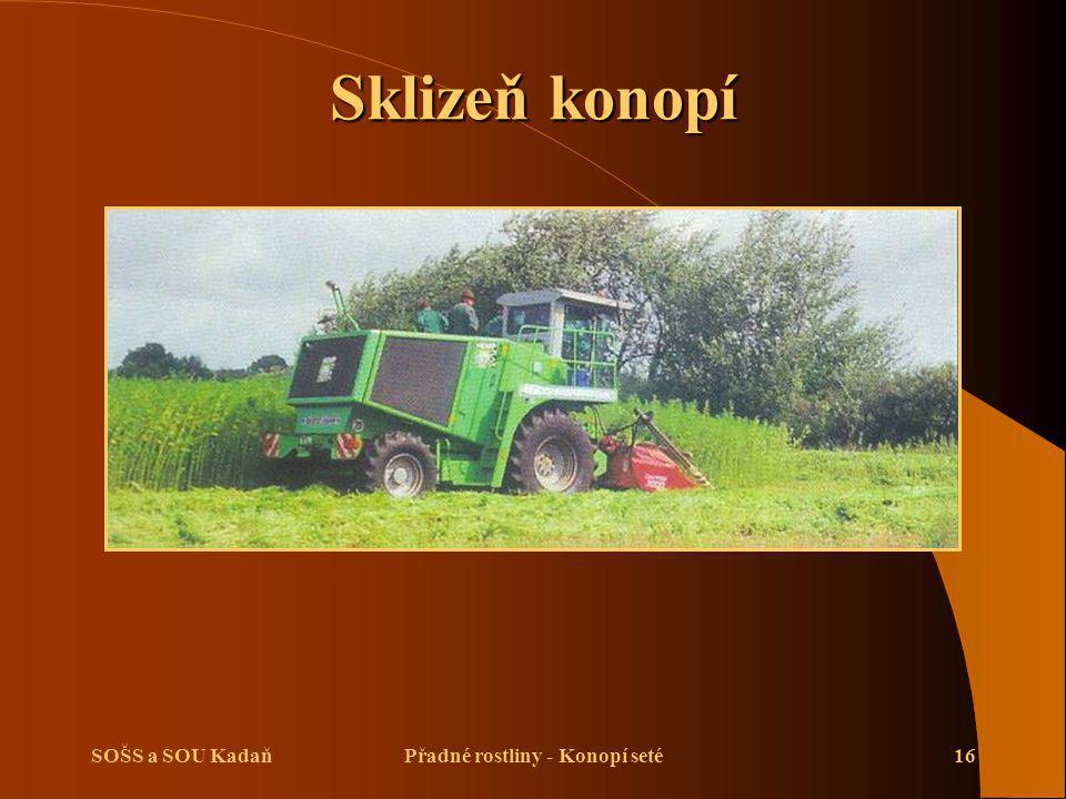 SOŠS a SOU KadaňPřadné rostliny - Konopí seté16 Sklizeň konopí