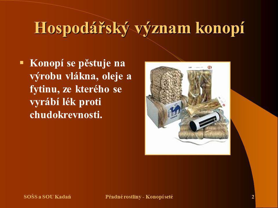 SOŠS a SOU KadaňPřadné rostliny - Konopí seté2 Hospodářský význam konopí  Konopí se pěstuje na výrobu vlákna, oleje a fytinu, ze kterého se vyrábí lék proti chudokrevnosti.
