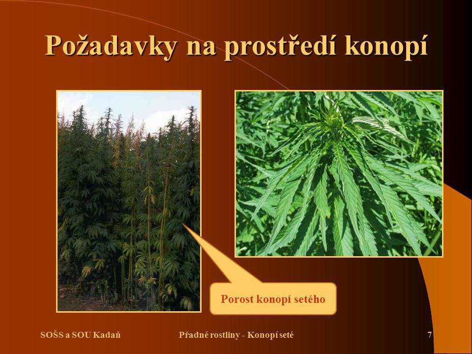 SOŠS a SOU KadaňPřadné rostliny - Konopí seté7 Požadavky na prostředí konopí Porost konopí setého
