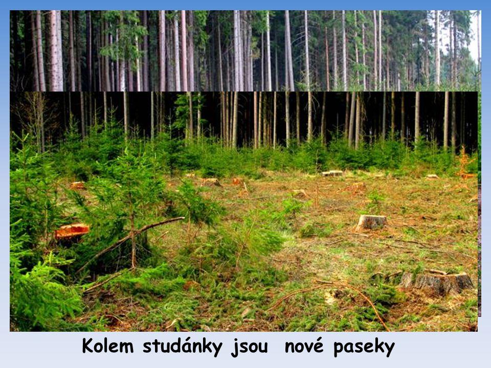 Ve studánce v lese zase již teče voda
