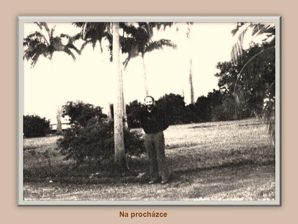 Palmový háj