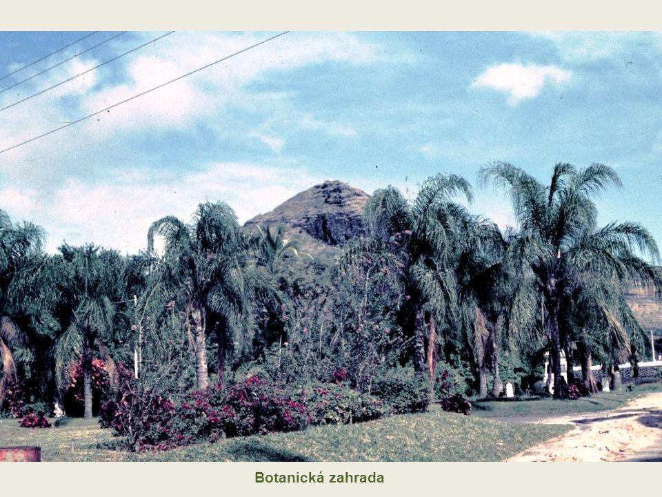 """Koho jsme """"neobjevili v botanické zahradě daleko od domova – na Mauritiu"""