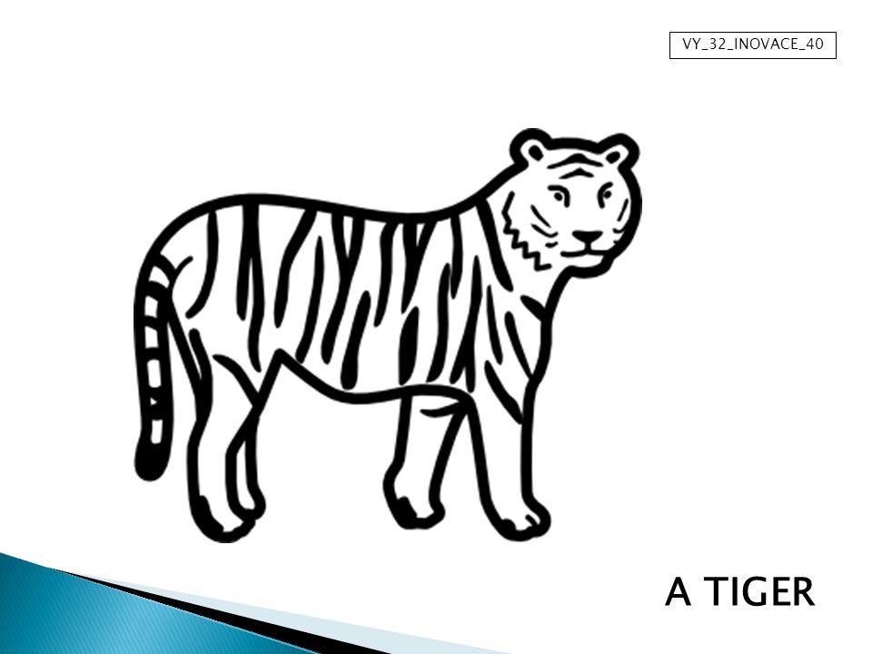 VY_32_INOVACE_40 A TIGER