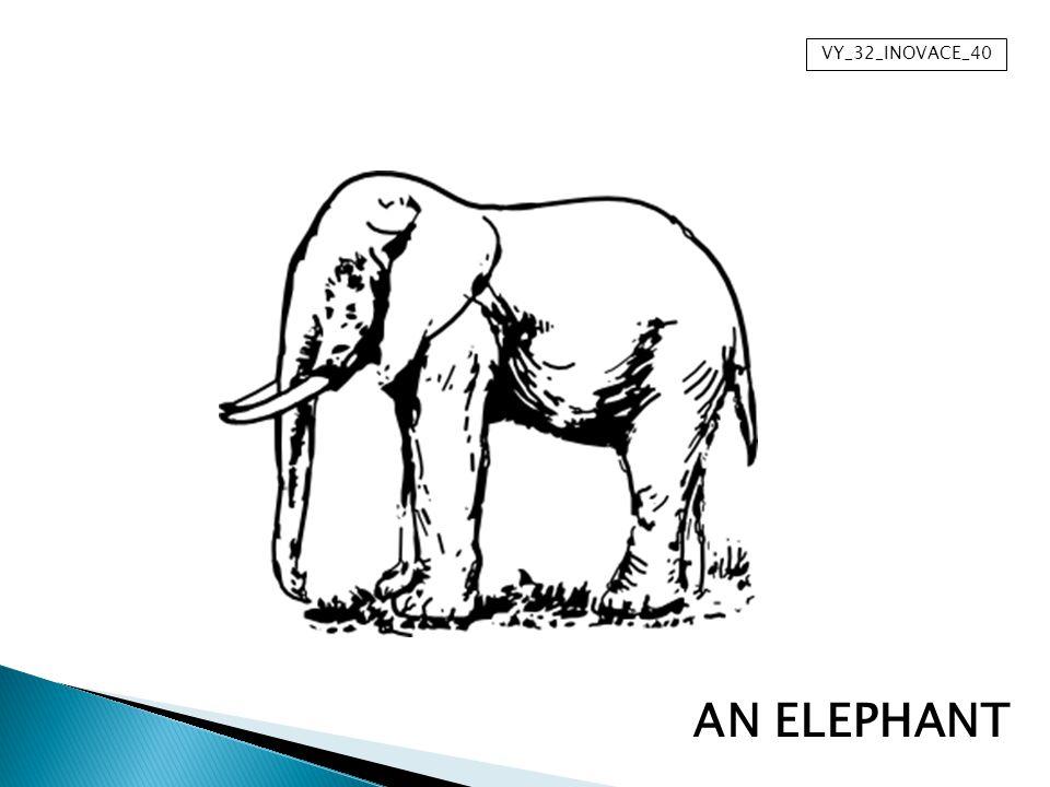 VY_32_INOVACE_40 AN ELEPHANT