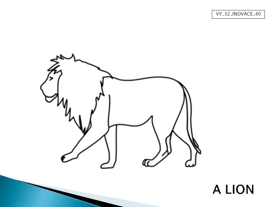 VY_32_INOVACE_40 A LION
