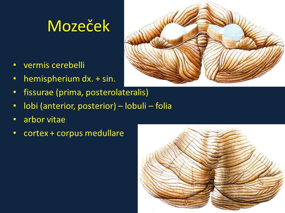 Mozeček vermis cerebelli hemispherium dx. + sin. fissurae (prima, posterolateralis) lobi (anterior, posterior) – lobuli – folia arbor vitae cortex + c
