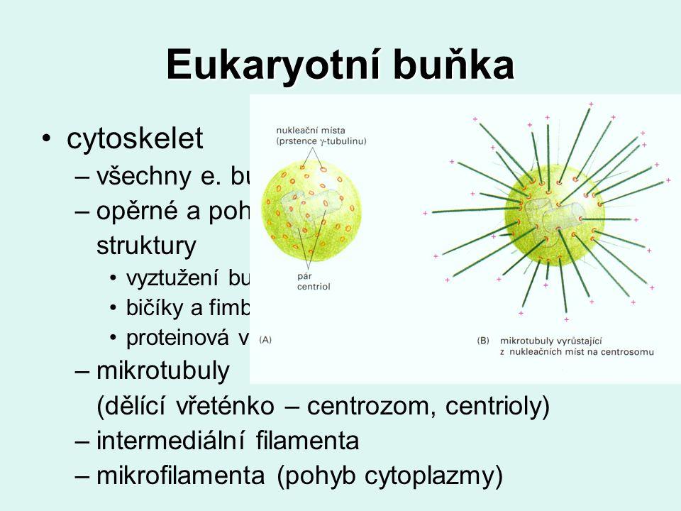 Eukaryotní buňka cytoskelet –všechny e.