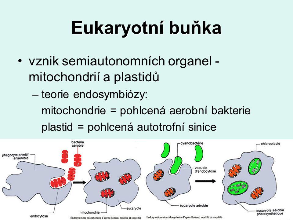 Eukaryotní buňka vznik semiautonomních organel - mitochondrií a plastidů –teorie endosymbiózy: mitochondrie = pohlcená aerobní bakterie plastid = pohlcená autotrofní sinice