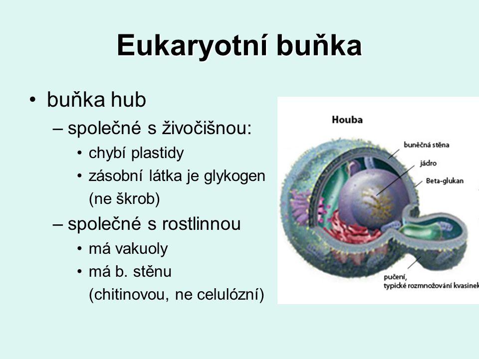 Eukaryotní buňka buňka hub –společné s živočišnou: chybí plastidy zásobní látka je glykogen (ne škrob) –společné s rostlinnou má vakuoly má b. stěnu (