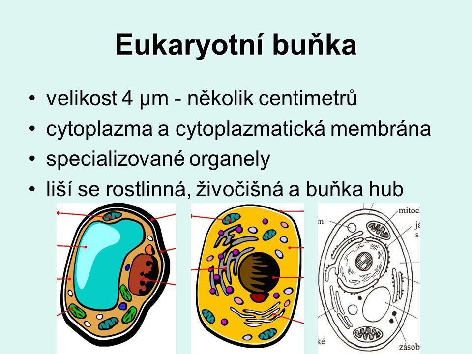 Eukaryotní buňka velikost 4 μm - několik centimetrů cytoplazma a cytoplazmatická membrána specializované organely liší se rostlinná, živočišná a buňka hub