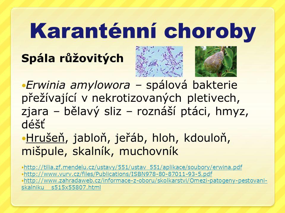Karanténní choroby Spála růžovitých Erwinia amylowora – spálová bakterie přežívající v nekrotizovaných pletivech, zjara – bělavý sliz – roznáší ptáci,