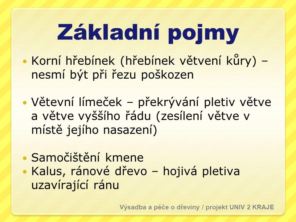 Správný řez Řez na větevní límeček (A) (jehličnany v.