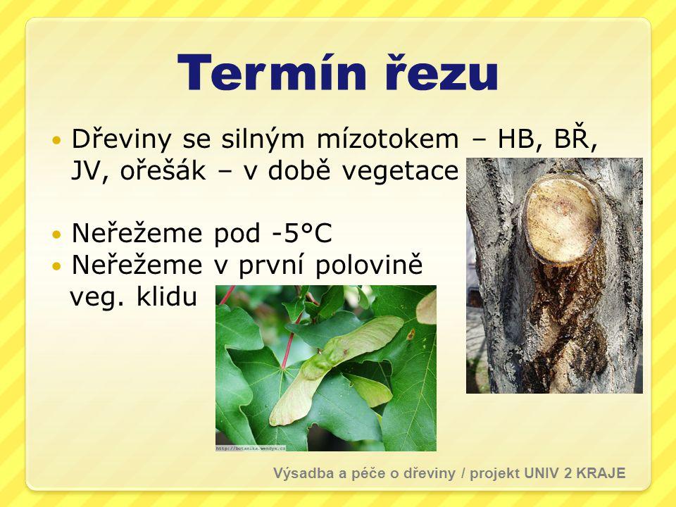 Termín řezu Dřeviny se silným mízotokem – HB, BŘ, JV, ořešák – v době vegetace Neřežeme pod -5°C Neřežeme v první polovině veg. klidu Výsadba a péče o