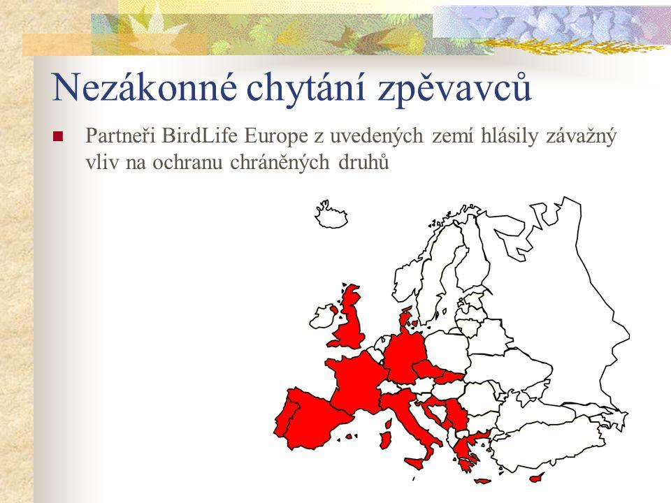 Nezákonné chytání zpěvavců Partneři BirdLife Europe z uvedených zemí hlásily závažný vliv na ochranu chráněných druhů