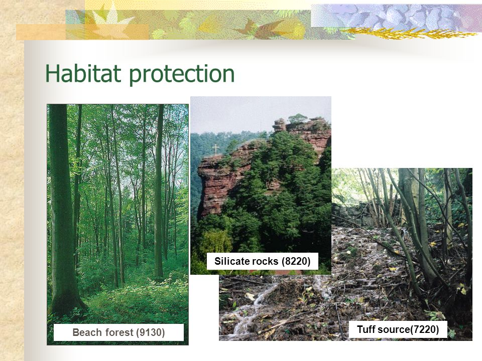 Tuff source(7220) Beach forest (9130) Habitat protection Silicate rocks (8220)