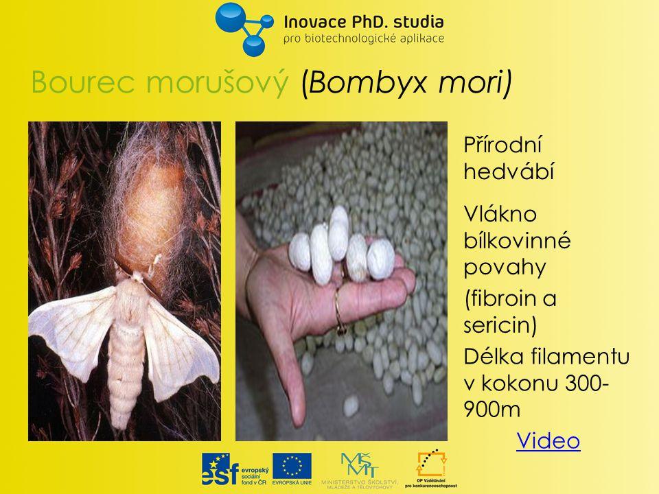 Bourec morušový (Bombyx mori) Délka filamentu v kokonu 300- 900m Video Vlákno bílkovinné povahy (fibroin a sericin) Přírodní hedvábí