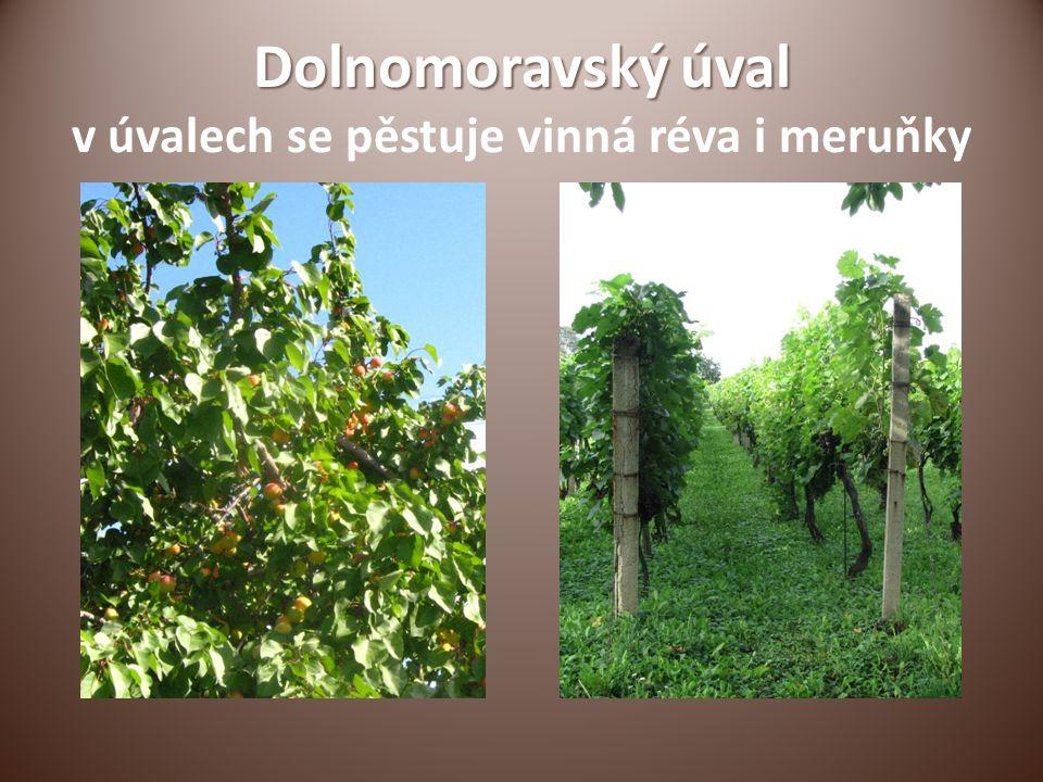 Dolnomoravský úval Dolnomoravský úval v úvalech se pěstuje vinná réva i meruňky