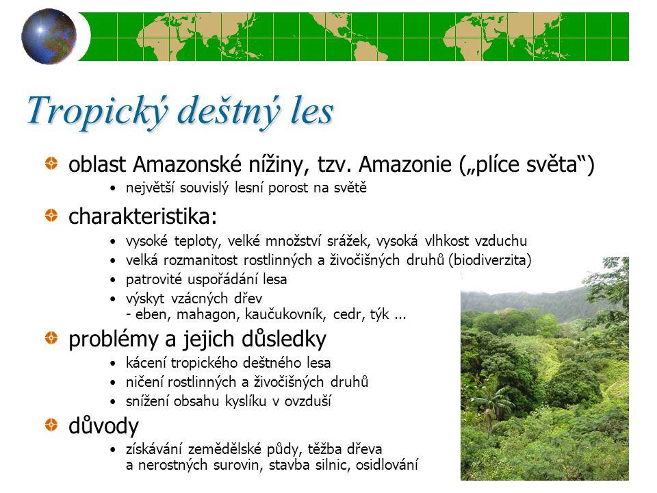 """Tropický deštný les oblast Amazonské nížiny, tzv. Amazonie (""""plíce světa"""") největší souvislý lesní porost na světě charakteristika: vysoké teploty, ve"""