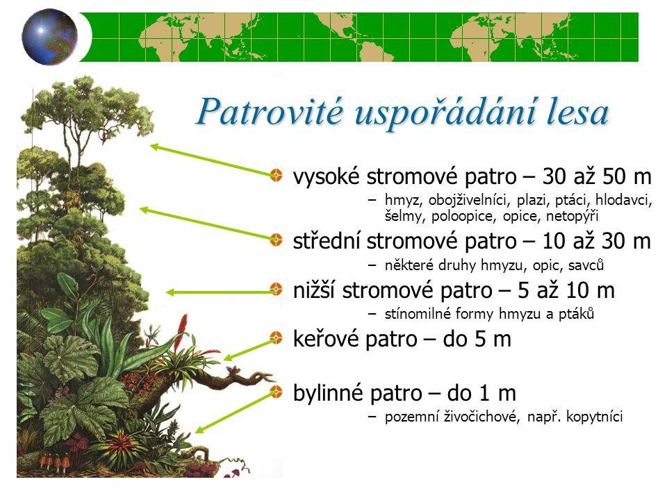 Patrovité uspořádání lesa vysoké stromové patro – 30 až 50 m –hmyz, obojživelníci, plazi, ptáci, hlodavci, šelmy, poloopice, opice, netopýři střední s
