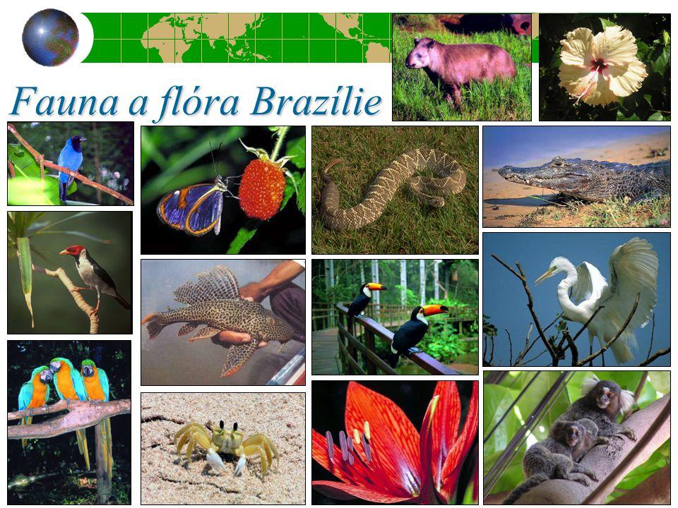 Fauna a flóra Brazílie