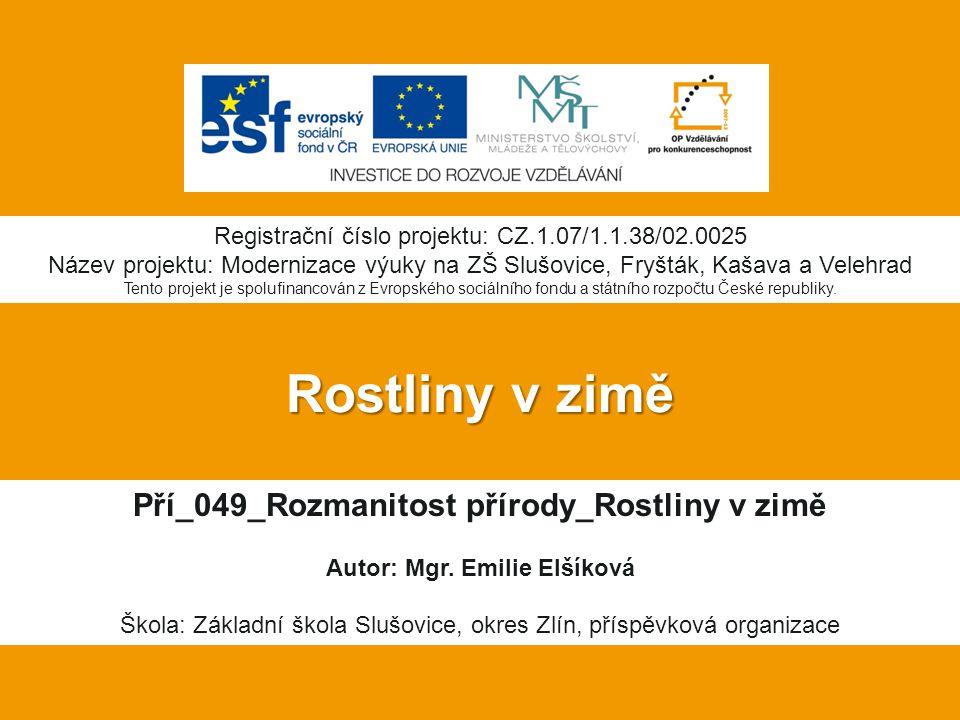 Rostliny v zimě Pří_049_Rozmanitost přírody_Rostliny v zimě Autor: Mgr.