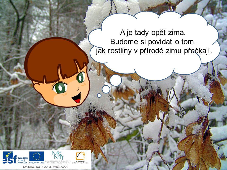 Ahoj, A je tady opět zima. Budeme si povídat o tom, jak rostliny v přírodě zimu přečkají.