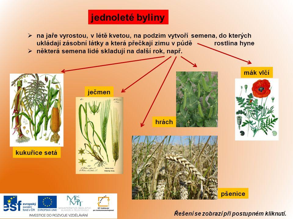 Řešení se zobrazí při postupném kliknutí. jednoleté byliny  na jaře vyrostou, v létě kvetou, na podzim vytvoří semena, do kterých ukládají zásobní lá