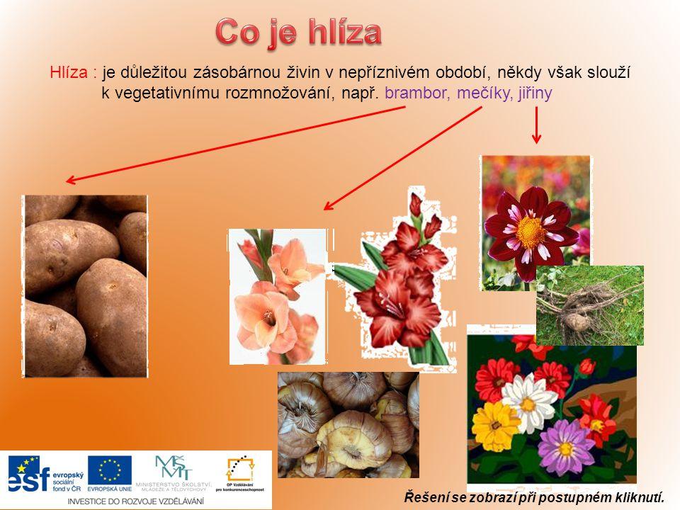 Hlíza : je důležitou zásobárnou živin v nepříznivém období, někdy však slouží k vegetativnímu rozmnožování, např. brambor, mečíky, jiřiny Řešení se zo