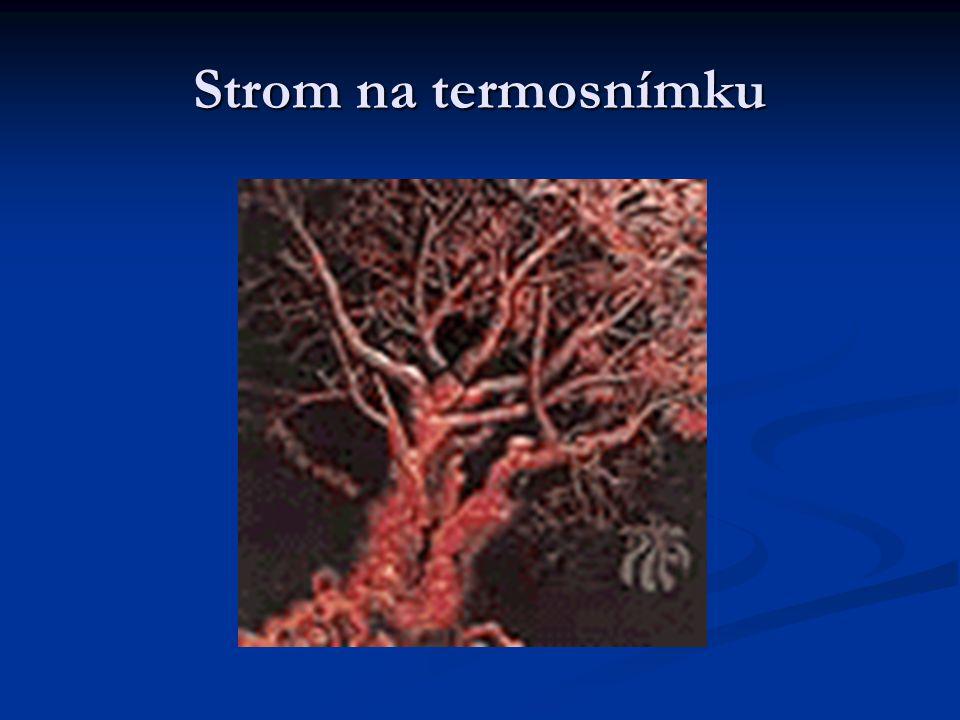 Strom na termosnímku