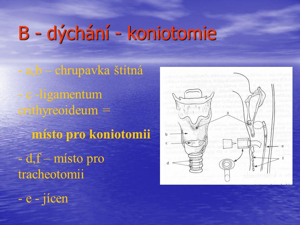 B - dýchání - koniotomie - a,b – chrupavka štítná - c -ligamentum crithyreoideum = místo pro koniotomii - d,f – místo pro tracheotomii - e - jícen