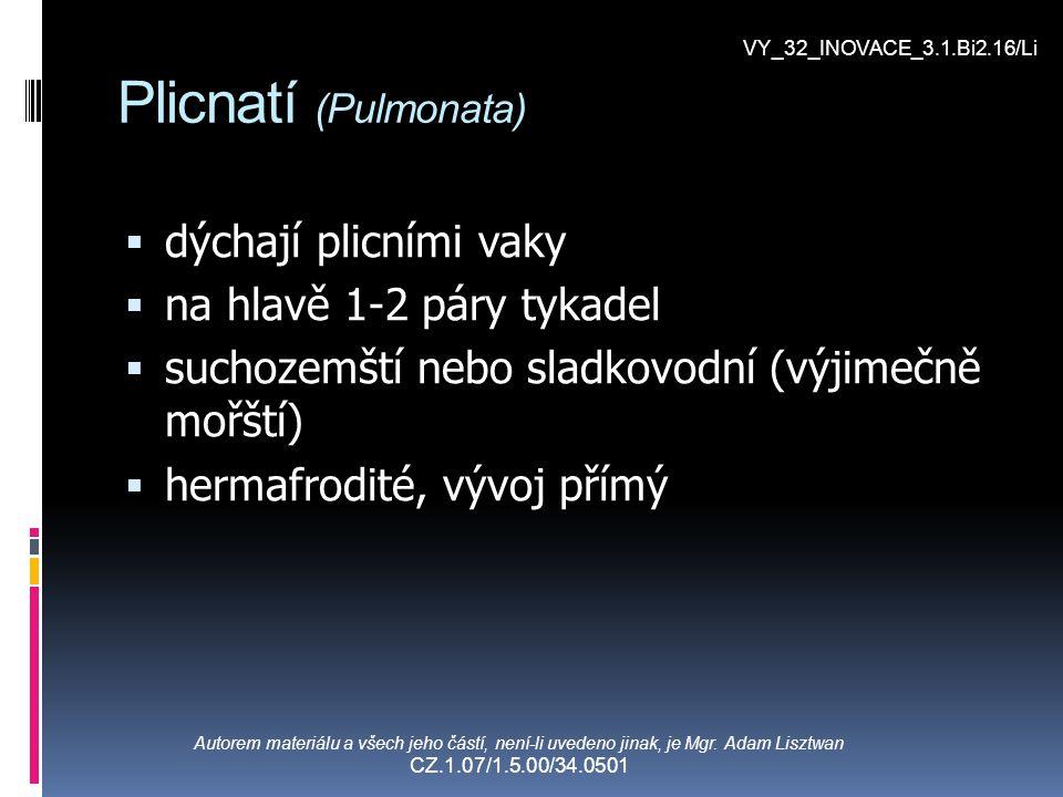 Plicnatí (Pulmonata)  dýchají plicními vaky  na hlavě 1-2 páry tykadel  suchozemští nebo sladkovodní (výjimečně mořští)  hermafrodité, vývoj přímý