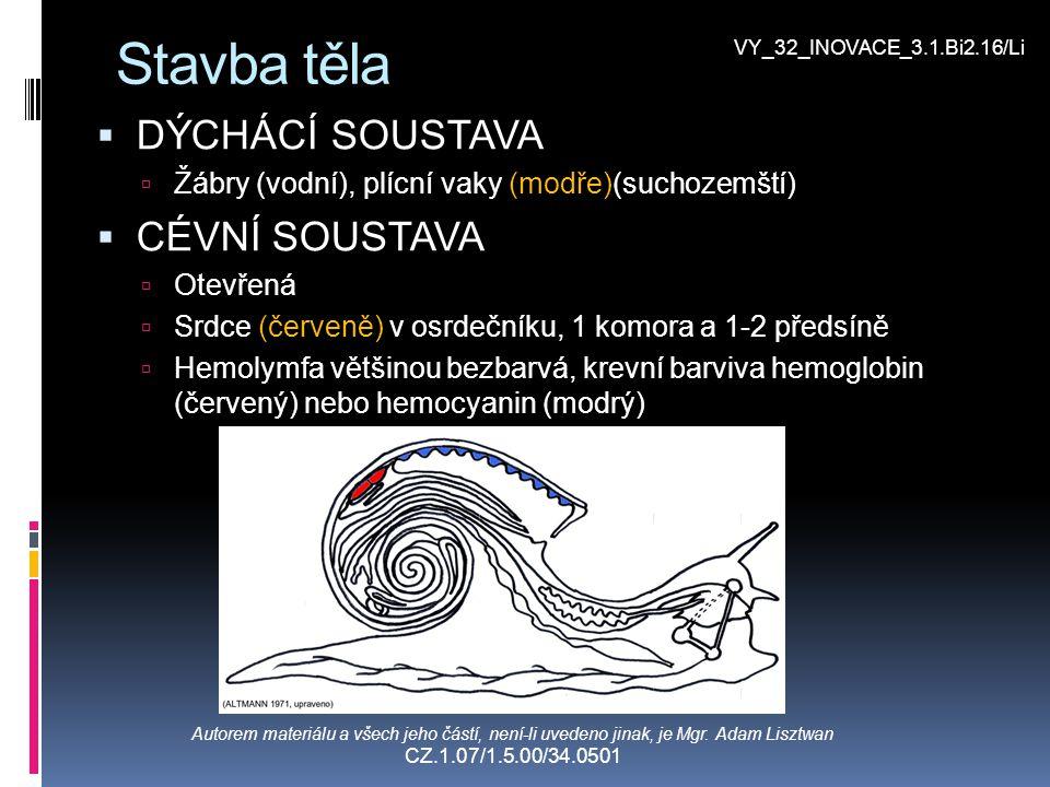 Stavba těla  VYLUČOVACÍ SOUSTAVA (fialově)  Metanefridie  POHLAVNÍ SOUSTAVA (růžově)  Gonochoristé i hermafrodité  Vývoj nepřímý přes larvu veliger (mořští) nebo přímý (suchozemští)  NERVOVÁ SOUSTAVA (černě)  Gangliová  SMYSLY  Hmat  Chemoreceptory  Zrak Autorem materiálu a všech jeho částí, není-li uvedeno jinak, je Mgr.