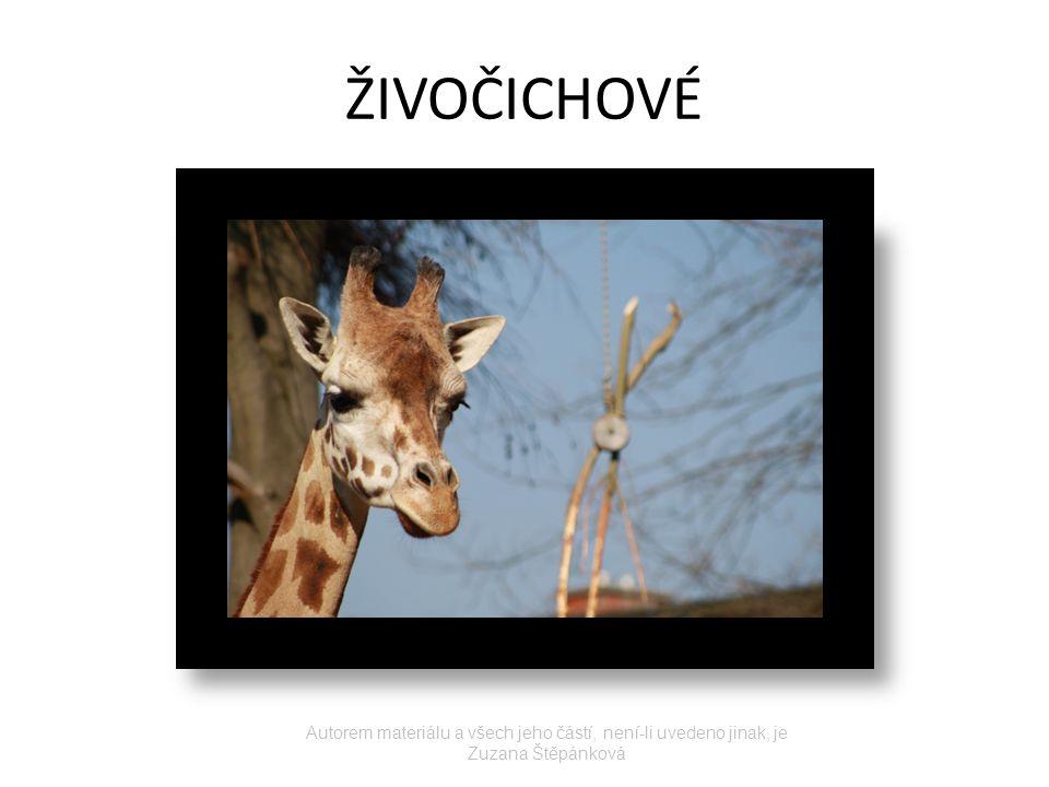 ŽIVOČICHOVÉ Autorem materiálu a všech jeho částí, není-li uvedeno jinak, je Zuzana Štěpánková