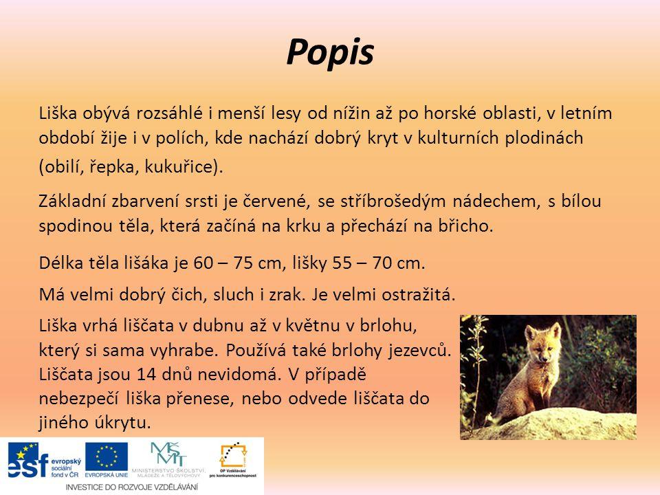Popis Liška obývá rozsáhlé i menší lesy od nížin až po horské oblasti, v letním období žije i v polích, kde nachází dobrý kryt v kulturních plodinách (obilí, řepka, kukuřice).