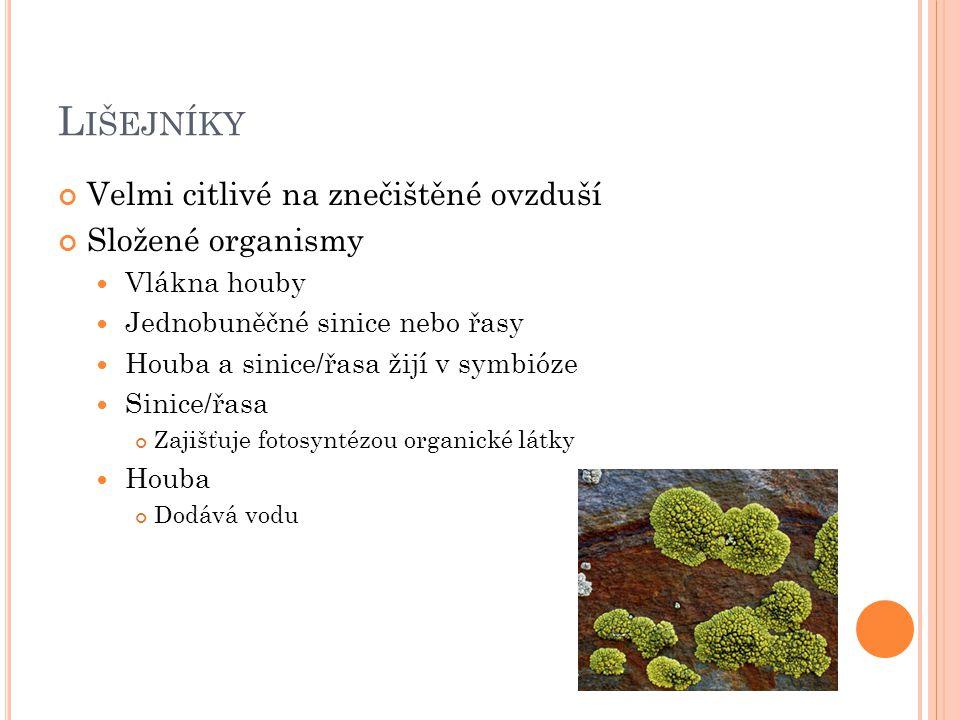 L IŠEJNÍKY Velmi citlivé na znečištěné ovzduší Složené organismy Vlákna houby Jednobuněčné sinice nebo řasy Houba a sinice/řasa žijí v symbióze Sinice/řasa Zajišťuje fotosyntézou organické látky Houba Dodává vodu