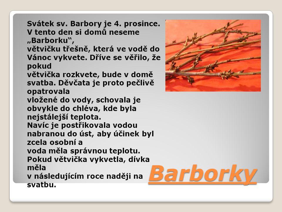 """Barborky Svátek sv. Barbory je 4. prosince. V tento den si domů neseme """"Barborku"""", větvičku třešně, která ve vodě do Vánoc vykvete. Dříve se věřilo, ž"""