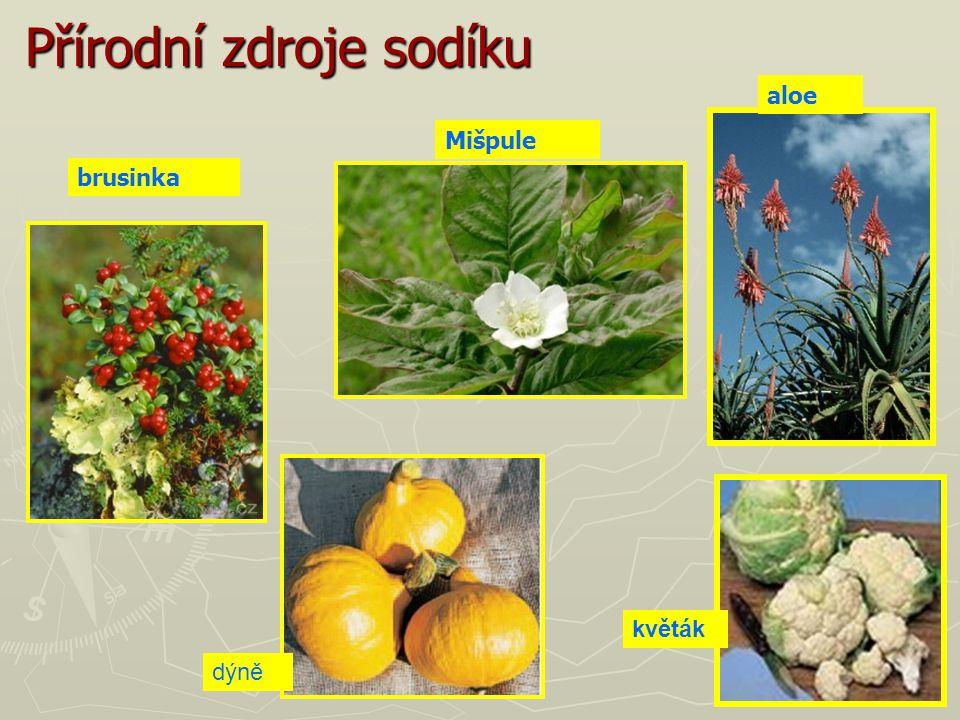 Přírodní zdroje sodíku dýně květák Mišpule aloe brusinka