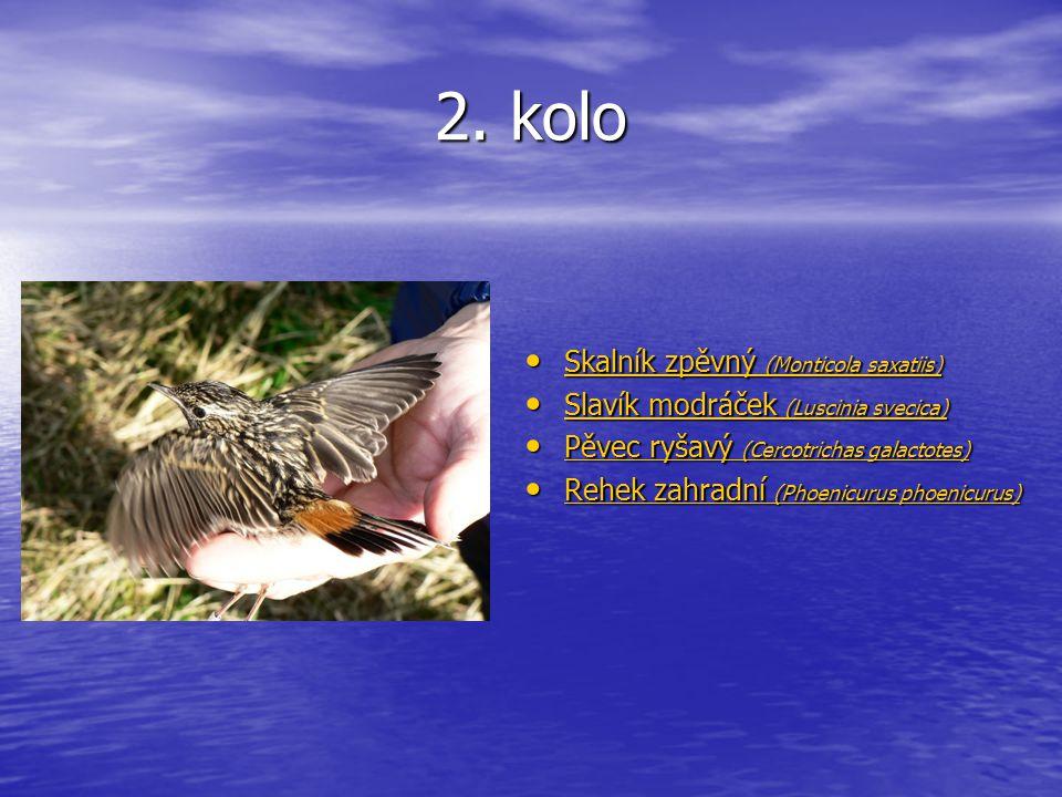 2. kolo Skalník zpěvný (Monticola saxatiis) Skalník zpěvný (Monticola saxatiis) Skalník zpěvný (Monticola saxatiis) Skalník zpěvný (Monticola saxatiis