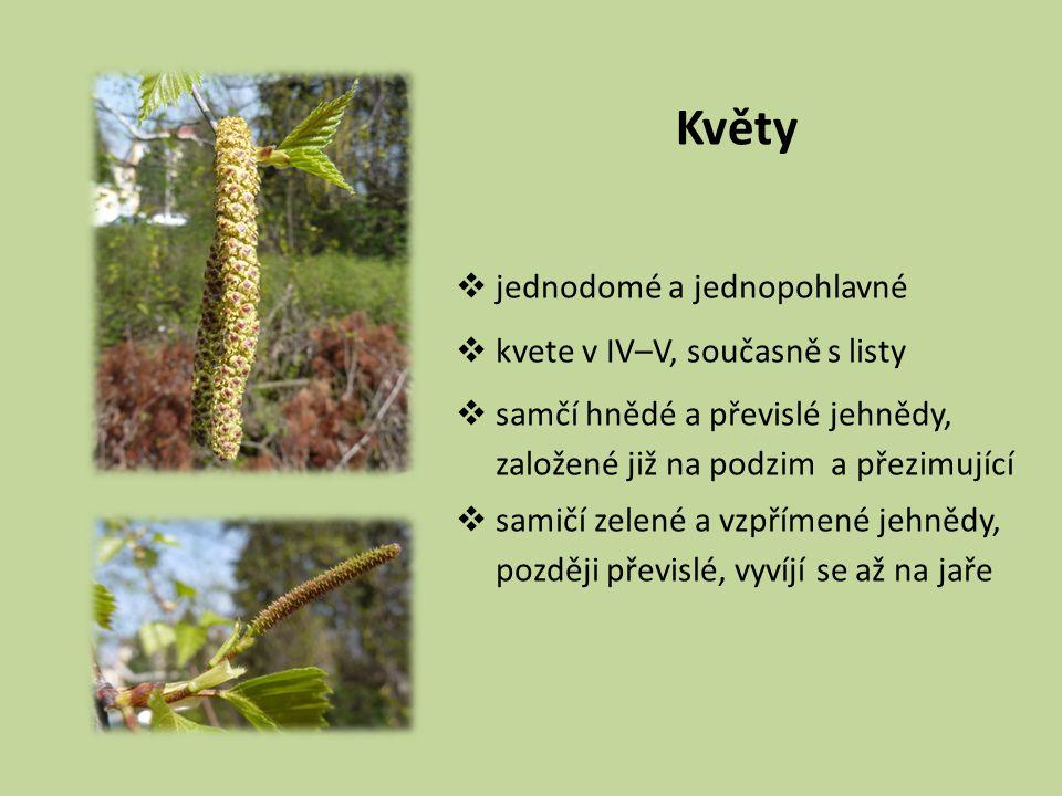 Květy  jednodomé a jednopohlavné  kvete v IV–V, současně s listy  samčí hnědé a převislé jehnědy, založené již na podzim a přezimující  samičí zelené a vzpřímené jehnědy, později převislé, vyvíjí se až na jaře