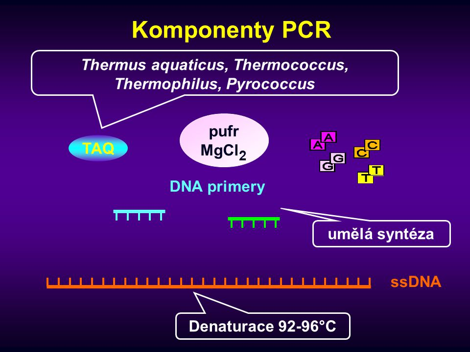Syntéza nukleotidových řetězců  probíhá při 72°C  pro fragmenty o velikosti do 500bp se doporučuje ne delší než 20s  pro fragmenty do 1,2 kbp asi 40s  rychlost Taq polymerázy činí 150 připojených nukleotidů/sekundu