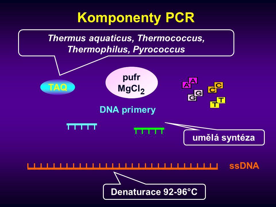 1.PCR cyklus 1. denaturace (92-96°C) 2. annealing (45-72°C) dsDNA 3.