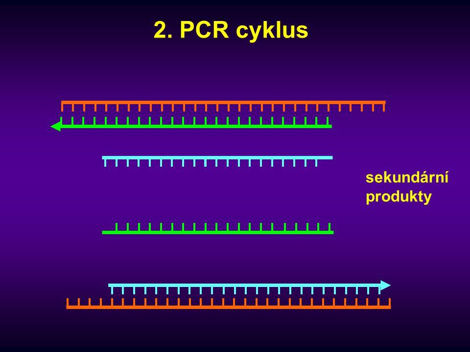 3. PCR cyklus amplikony