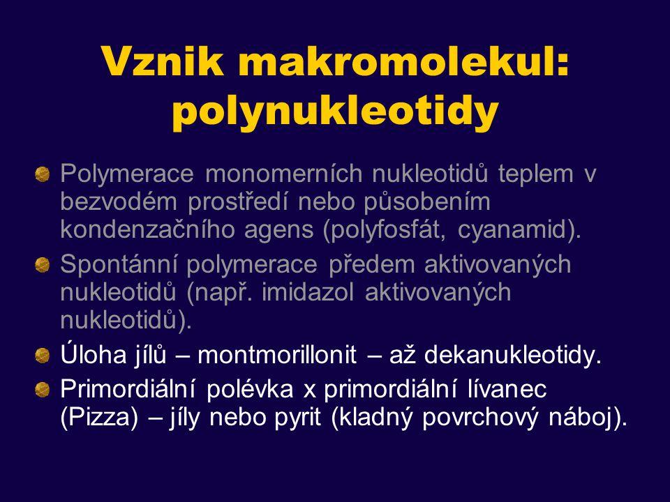 Vznik makromolekul: polynukleotidy Polymerace monomerních nukleotidů teplem v bezvodém prostředí nebo působením kondenzačního agens (polyfosfát, cyanamid).
