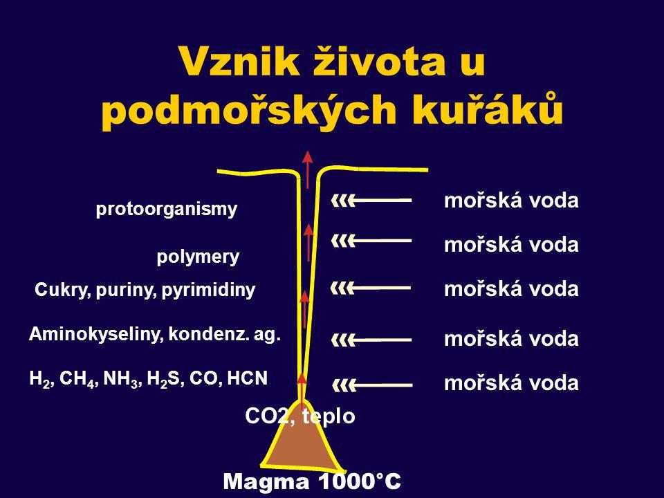 Vznik života u podmořských kuřáků mořská voda Magma 1000°C CO2, teplo H 2, CH 4, NH 3, H 2 S, CO, HCN Cukry, puriny, pyrimidiny Aminokyseliny, kondenz.