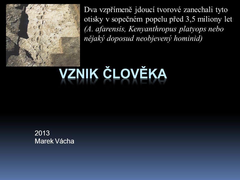 Australopitecus boisei louskáček  Nalezen v Olduvajské rokli v Tanzánii M.