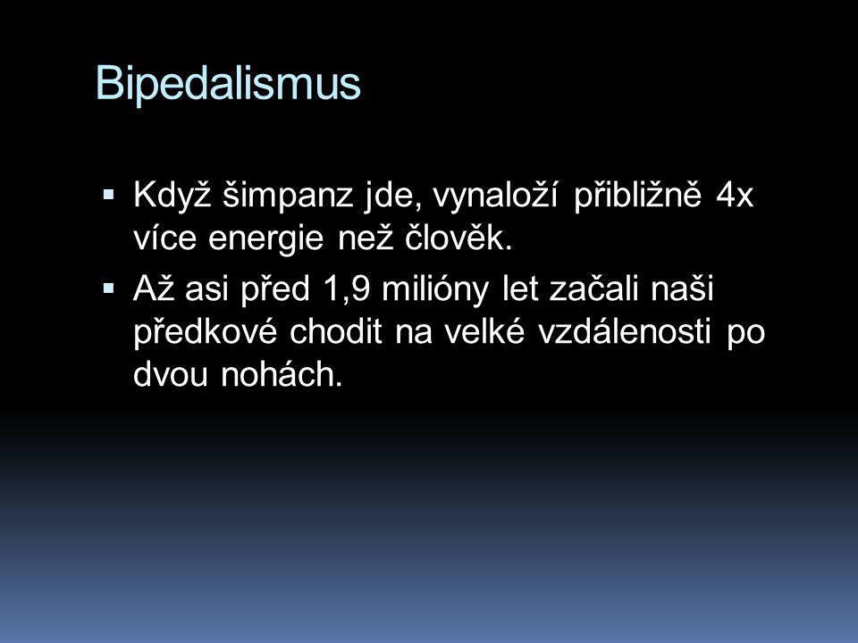 Bipedalismus  Když šimpanz jde, vynaloží přibližně 4x více energie než člověk.  Až asi před 1,9 milióny let začali naši předkové chodit na velké vzd