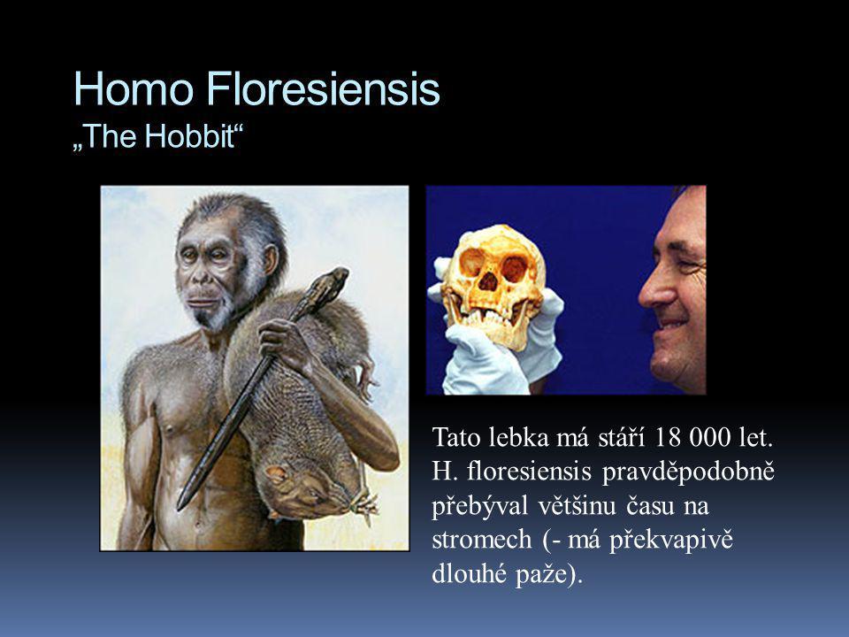 """Homo Floresiensis """"The Hobbit"""" Tato lebka má stáří 18 000 let. H. floresiensis pravděpodobně přebýval většinu času na stromech (- má překvapivě dlouhé"""