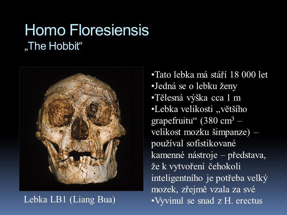 """Homo Floresiensis """"The Hobbit"""" Tato lebka má stáří 18 000 let Jedná se o lebku ženy Tělesná výška cca 1 m Lebka velikosti """"většího grapefruitu"""" (380 c"""