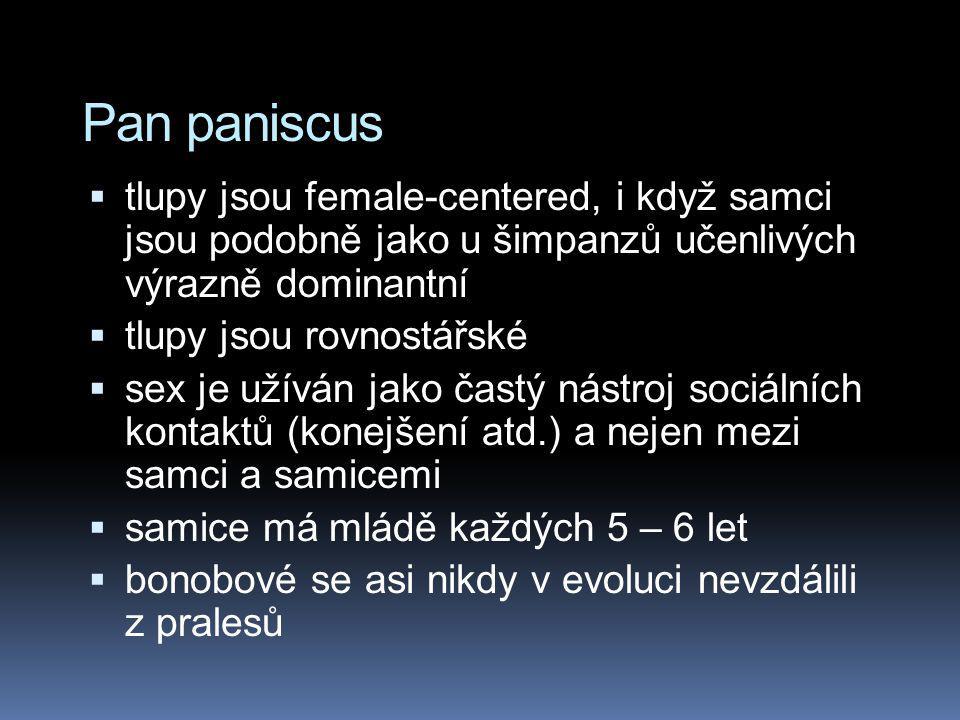 Pan paniscus  tlupy jsou female-centered, i když samci jsou podobně jako u šimpanzů učenlivých výrazně dominantní  tlupy jsou rovnostářské  sex je