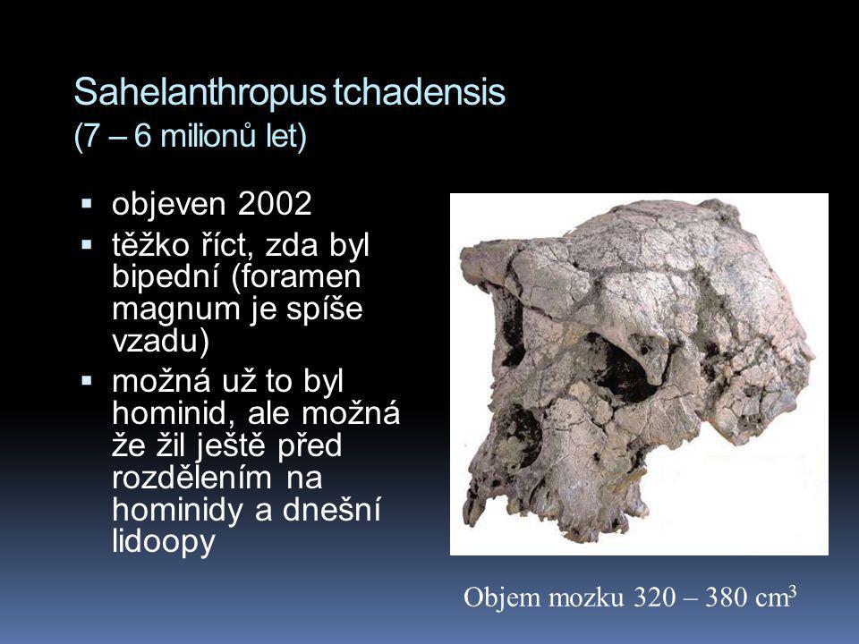 Sahelanthropus tchadensis (7 – 6 milionů let)  objeven 2002  těžko říct, zda byl bipední (foramen magnum je spíše vzadu)  možná už to byl hominid,